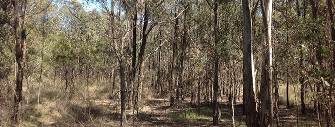 nsw threatened species assessment guidelines